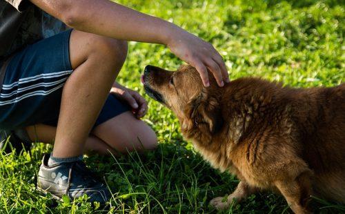 アニマルセラピストとセラピー犬