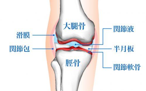 膝関節,滑膜,関節包,関節液,半月板,軟骨